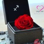 Hộp quà tặng đính đá cao cấp – Hoa hồng bất từ Only You